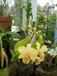 I have written several stories about orchids.